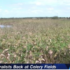 Bird Naturalists Back at the Celery Fields