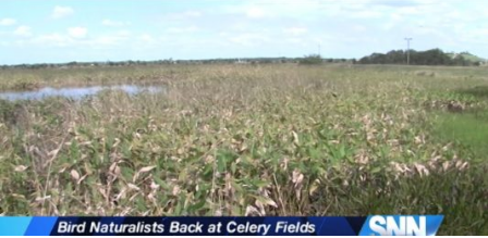 BIRD NATURALISTS AT THE CELERY FIELDS
