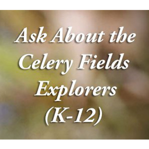 Ask about the celery fields image