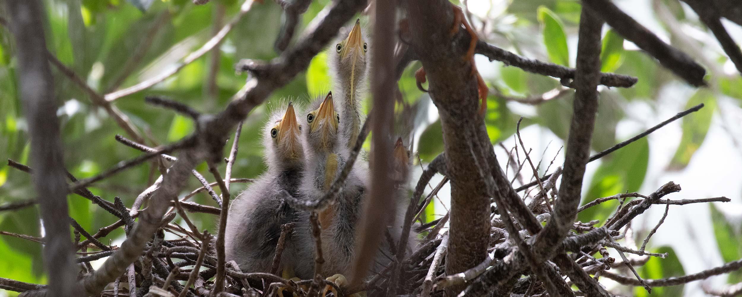 Baby birds image