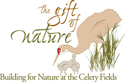 The Gift of Nature, building for nature at the celery fields image