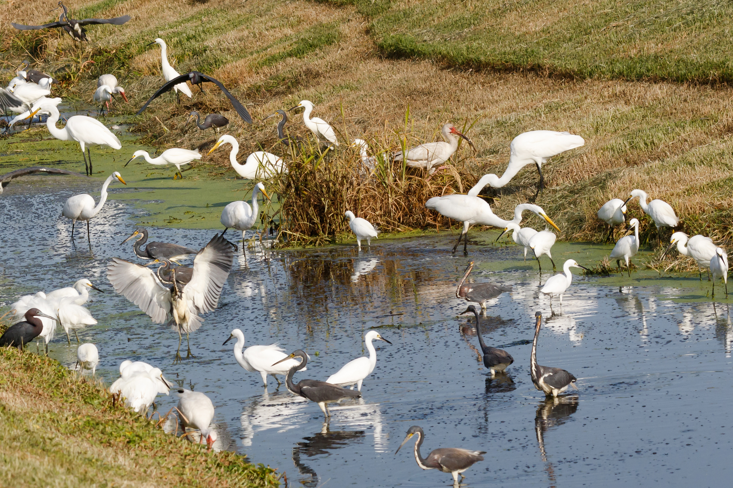 Various birds in pond image
