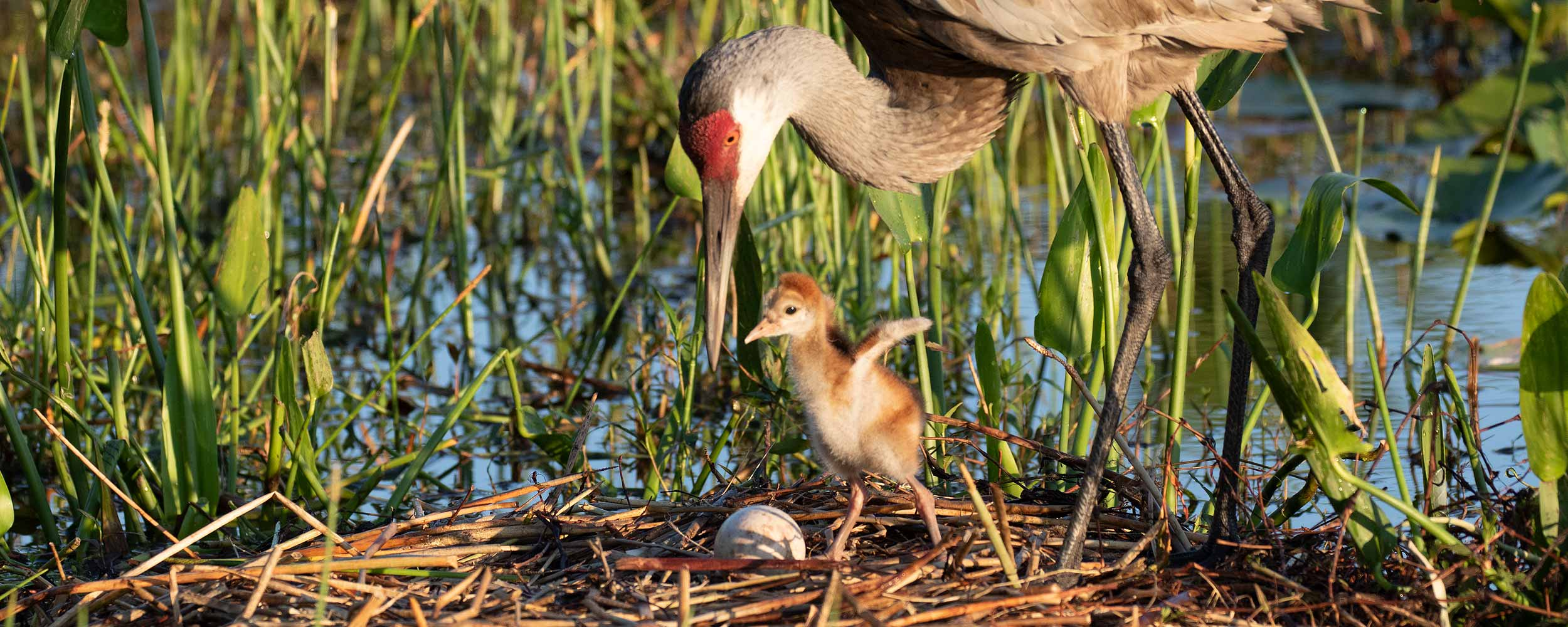 Mother and child bird image