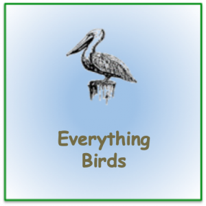 """Stencil pelican image with words """"everything birds"""""""
