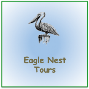 "Stencil pelican image with words ""Eagle Nest Tours"""