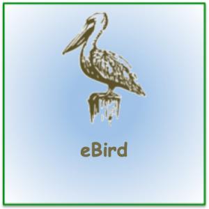 Stencil pelican image