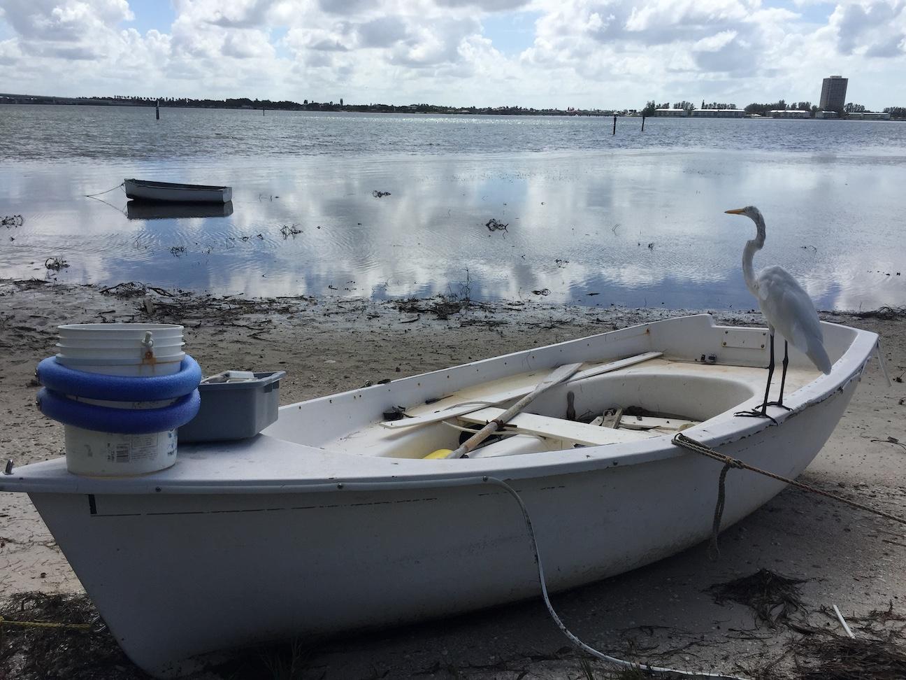 Bird sitting on small boat image