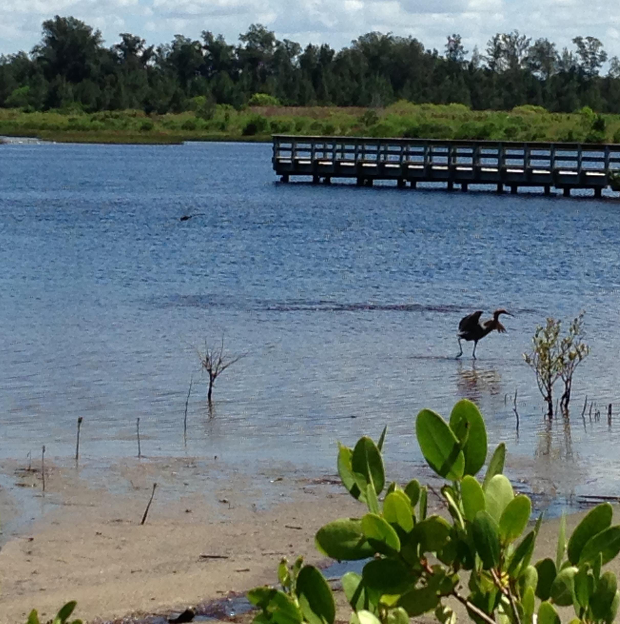 Boardwalk over pond image