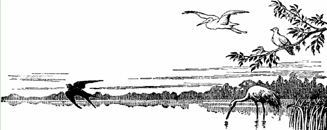 Stencil image of pond with various birds
